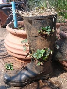Our daughter, Jessie's, Gumboot Strawberry Planter